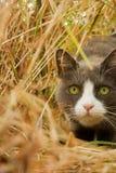 Versteckende Katze Stockfotos