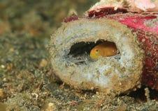 Versteckende kleine Fische Lizenzfreie Stockfotos