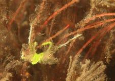 Versteckende Krabbe Lizenzfreie Stockbilder