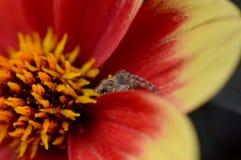 Versteckende Spinne Lizenzfreies Stockfoto