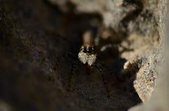 Versteckende Spinne lizenzfreie stockfotos