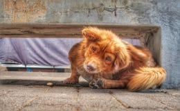 Versteckender Hund stockbilder