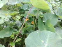 Versteckte Blume Stockbild