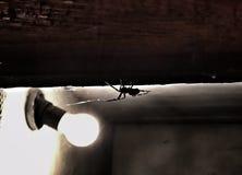 Versteckte Drohung - drastische vergiftete Spinne zu Hause Lizenzfreies Stockbild