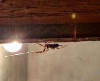 Versteckte Drohung - vergiftete Spinne zu Hause Lizenzfreies Stockfoto