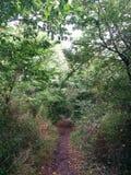 Versteckte Forrest-Straße, in mit Büschen bepflanzt lizenzfreies stockbild