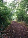 Versteckte Forrest-Straße, in mit Büschen bepflanzt lizenzfreie stockfotografie