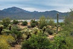 Versteckte Schätze haben um Phoenix Arizona Überfluss Lizenzfreie Stockfotografie