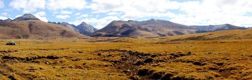 Versteckte Weide in Tibet Stockfoto