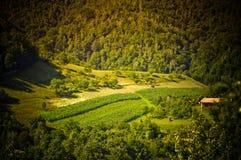 Versteckte Wiese Orastie Hunedoara Rumänien Lizenzfreies Stockbild