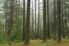 Versteckter Campingplatz Lizenzfreie Stockfotos
