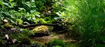 Versteckter Strom im wilden Wald Stockfotografie