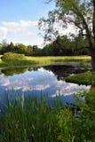 Versteckter Teich Stockbild