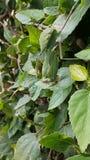 Verstecktes Insekt Lizenzfreies Stockbild