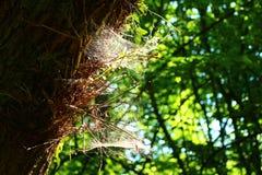 Verstecktes Spinnennetz stockbilder