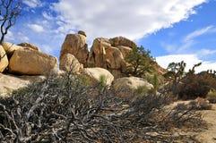 Verstecktes Tal, Joshua Tree National-Park Lizenzfreie Stockbilder