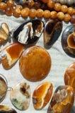 Versteinert bleibt vom Meeresflora und -fauna die Überreste oder der Eindruck einer PR lizenzfreies stockbild