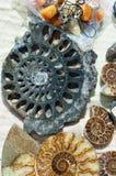 Versteinert bleibt vom Meeresflora und -fauna die Überreste oder der Eindruck einer PR lizenzfreie stockfotografie