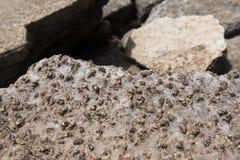 Versteinert bleibt von den Muscheln bei Krabi stockbild