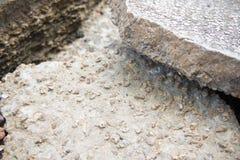 Versteinert bleibt von den Muscheln bei Krabi lizenzfreies stockbild
