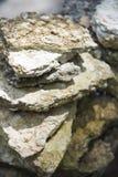 Versteinert bleibt von den Muscheln bei Krabi lizenzfreies stockfoto