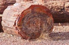 Versteinert-Wald-National-Park, Arizona, USA Stockfotos