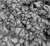 Versteinerte Austern (Thailand, Asien) Lizenzfreies Stockbild