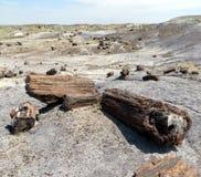 Versteinerte Bäume, Arizona, USA Lizenzfreies Stockfoto