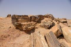 Versteinerte Bäume in Sudan lizenzfreies stockfoto