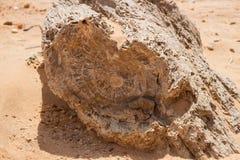 Versteinerte Bäume in Sudan stockfotos