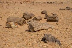 Versteinerte Bäume in Sudan lizenzfreie stockfotografie
