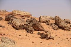 Versteinerte Bäume in Sudan stockbild