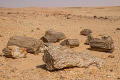 Versteinerte Bäume in Sudan, lizenzfreie stockfotografie