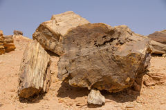 Versteinerte Bäume in Sudan stockfotografie