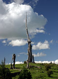 Versteinerte Baum-Stümpfe Stockbilder