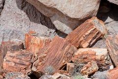 Versteinerte Baumstümpfe Stockbilder