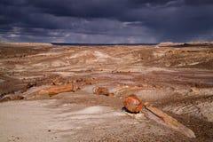 Versteinerte Forest National Park Lizenzfreie Stockbilder