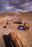 Versteinerte Forest National Park Stockbilder