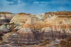 Versteinerte Forest National Park Stockbild