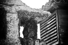 Versteinerte Hupen- und Luftentlüftungsöffnung Stockfotos