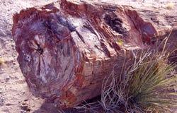 Versteinerter Baum Stockfotos