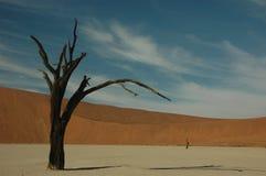 Versteinerter Baum lizenzfreies stockbild