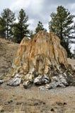 Versteinerter Baum-Stumpf Stockfotos