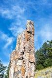 Versteinerter Baum in Yellowstone lizenzfreie stockfotos