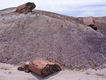 Versteinerter Baumklotz gebrochen in Stümpfe, als ob geschnitzt durch Kettensäge stockfoto