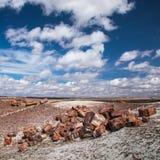 Versteinerter Forest National Park Stockbilder