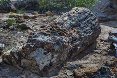 Versteinerter Klotz an Utah-` s versteinerte Forest State Park Stockfotografie