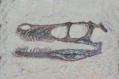 Versteinerter Kopf eines Velociraptordinosauriers mit scharfem theeth lizenzfreie stockfotos