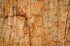 Versteinerter Rotholz-Baum-Hintergrund Lizenzfreie Stockfotos