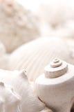 Versteinerter Seashellhintergrund stockfotos
